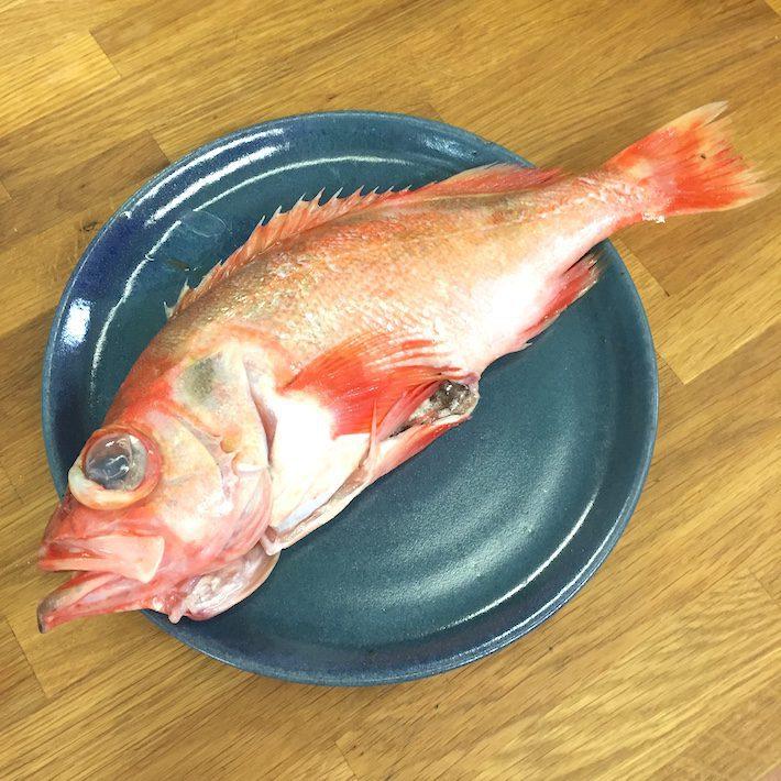 vis in zoutkorst