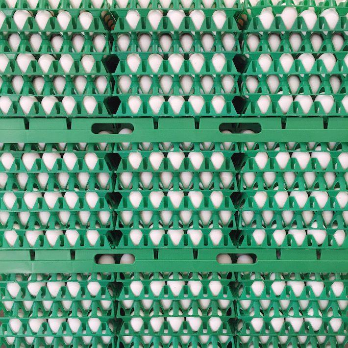 eieren productie