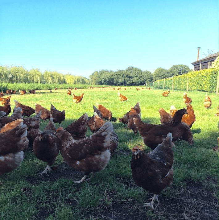 kip en het ei verhaal
