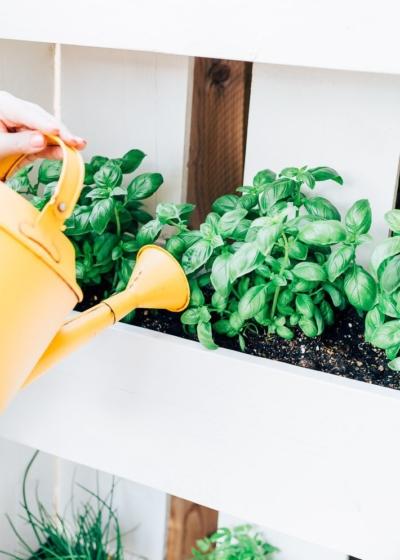 How To: Basilicumplant in leven houden