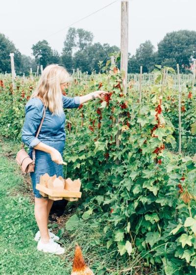 Hotspot: Fruit plukken in de fruittuin van West