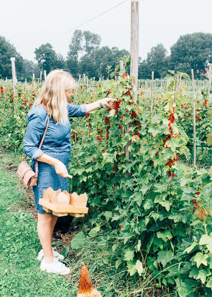 Fruittuinen-van-West-11-11.jpg
