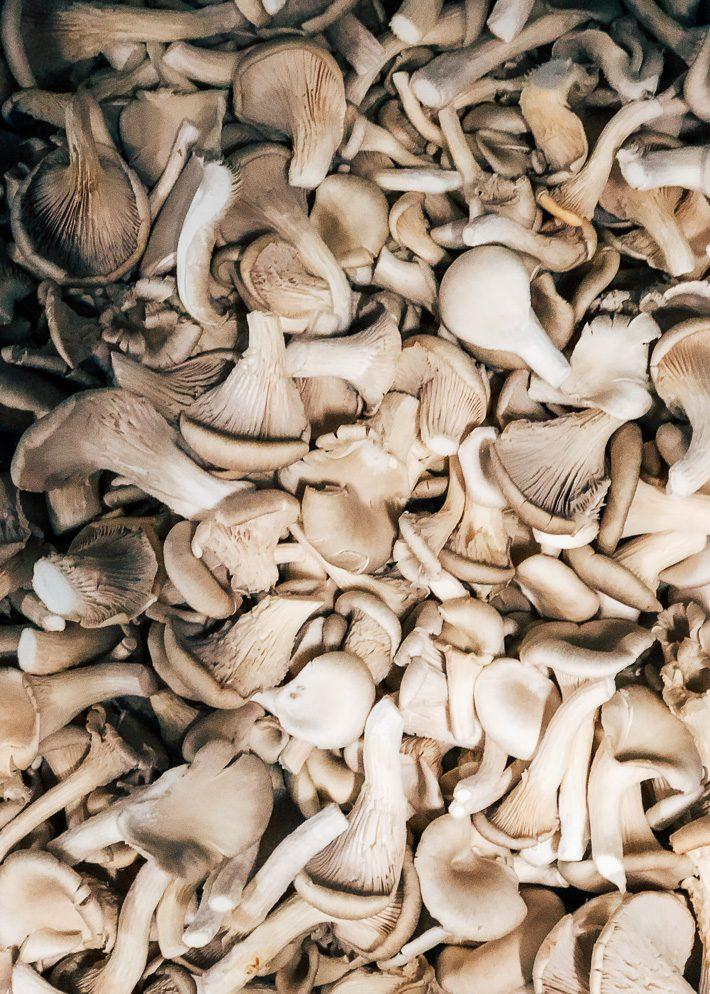 Ik ging op bezoek bij de champignon teler